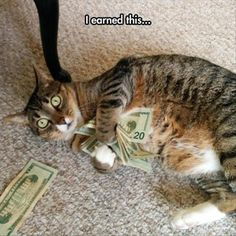 Funny pictures about The Real Business Cat . Oh, and cool pics about The Real Business Cat . Also, The Real Business Cat photos. Funny Animal Memes, Cute Funny Animals, Cat Memes, Funny Cute, Funniest Animals, Hilarious, Cute Cats And Kittens, I Love Cats, Crazy Cats