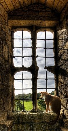 """""""MISS LILLIAN'S"""" FAVORITE SPOT WAS THIS BROKEN WINDOW IN THE ATTIC......WHENEVER WE COULDN'T FIND HER, WE'D LOOK IN THE ATTIC --- AND, SURE AS SHOOTIN' THERE SAT """"MISS LILLIAN"""".........ccp"""