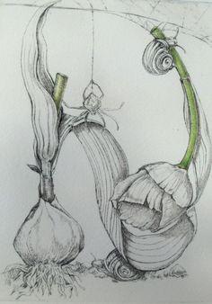 Botanical Illustration: Maria Sibylla Merian - one of the greatest ever botanical artists