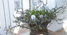 Magnolia twigs with Muscari and eggs for spring/Easter display. - Magnolia twigs with Muscari and eggs for spring/Easter display. Deco Floral, Arte Floral, Easter Flowers, Spring Flowers, Spring Design, Ikebana, Easter Crafts, Happy Easter, Flower Designs