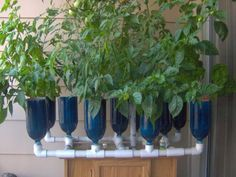 Have you heard of aquaponics? Aquaponics Combines the Growing of Fish and Plants You may grow plants in water and without soil and once one does this together with growing fish you are practicing aquaponics. Hydroponics Setup, Hydroponic Growing, Aquaponics System, Hydroponic Gardening, Growing Plants, Gardening Tips, Backyard Aquaponics, Garden Boxes, Herb Garden