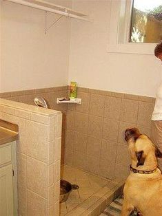 Dog Bath Design, Eclectic Basement With Dog Wash Station Also Tiling Wall And Floor Also Modern Shower Head And White Corner Rack For Soap And Brush Also Handsome South African Boer Boel Dog Race Also White Wall Paint Color: Ideas for Dog Wash Station
