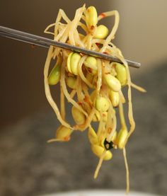 Soybean Sprout Side Dish (Korean)
