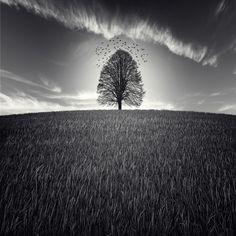 Luis Beltran Photography | Portfolio Sueña