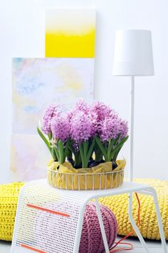 When the Hyacinth stays cool (for example in a bowl/basket near the front door) it will stay compact and sturdy. Don't give it much water indoors, then it will also stay compact and there will be less chance of it falling over.