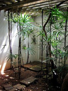 Yo haria toda la terraza, pero perderiamos luz... pero parte quedaria bien no? (Refiriendome a la estructura de madera) Plantas tropicales!!!