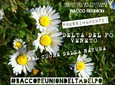PROSSIMAMENTE! #baccoreuniondeltadelpo #baccoreunion #Veneto #Deltadelpo Il viaggio senza fine! Tra i colori che fanno emozionare di bellezza,cullati dai colpi di vento con la primavera al sapore...
