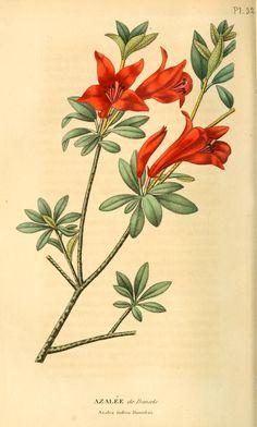 v.9 (1840-1841) - Annales de flore et de pomone : - Biodiversity Heritage Library