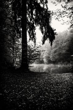 Klagenfurt, Shades Of Grey, Country Roads, Black And White, Water Pond, Black N White, Shades Of Gray Color, Black White
