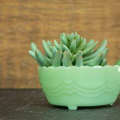 Fire King Jadeite Bulb Bowl - Jadite Footed Bowl - Anchor Hocking - Scallop Edge Drape Swag Bulb Bowl - Paperwhite Planter - Candy Bowl