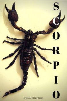Scorpio ♏ transformation!  #astrology #ZodiacQuotes #Scorpio #zodiacsign
