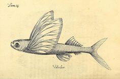 Descripcion de diferentes piezas de historia natural las mas del ramo maritimo :. En La Havana :En la Imprenta de la Capitania General,1787