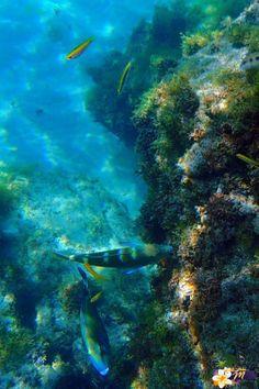 les Anses d'Arlet plage du Bourg
