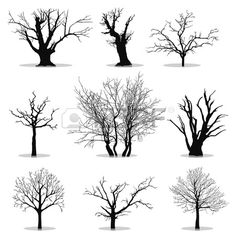 Collection of trees silhouettes Stock Vector