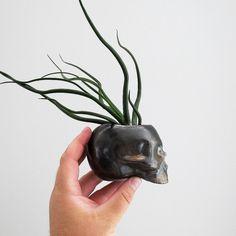Hey, I found this really awesome Etsy listing at https://www.etsy.com/listing/202236384/dark-bronze-ceramic-skull-planter