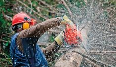 Our tree pruning services are more directed towards those young trees in order to early influence their shape and growth. Maryland, Tree Trimming Service, Popular Tree, Tree Surgeons, Tree Felling, Tree Pruning, Tree Company, How To Attract Customers, Tree Stump