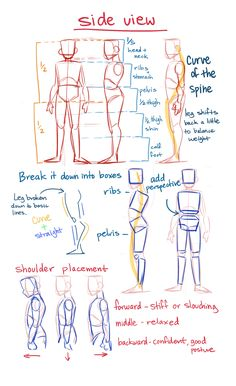 anatomy drawing tips