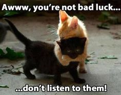 Black cats are not bad luck.