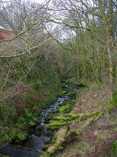 Typical Ravens' Habitat - -Raven's Craig Glen, South Burn, Brodoclea, Dalry, North Ayrshire, Scotland