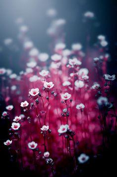 pretty flowers, wispy, colors