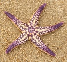 starfish | Starfish graphics and comments