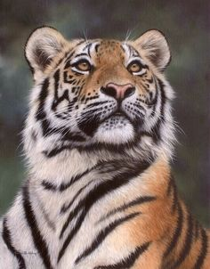 Tiger painting by Rachel Stribbling