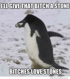 """When a male penguin wants to mate with a female penguin, he will search the area for the """"perfect"""" stone. Once found he will give it to a female and they will mate for life. :)"""