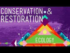 ▶ Conservation and Restoration Ecology: Crash Course Ecology #12 - YouTube