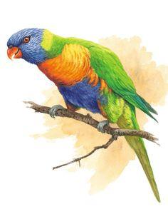 Rainbow Lorikeet SOLD