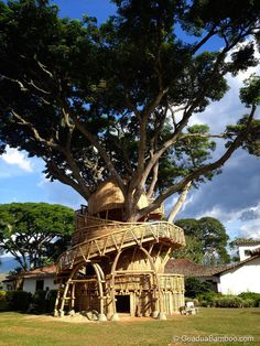 Believe it or not, but this Guadua bamboo treehouse by Colombian Architect Jaime Peña is the result of a simple bamboo dollhouse inquiry that got way, way out of hand. Read more: Biomimetic Bamboo Treehouse in Colombia — Guadua Bamboo Bamboo Building, Building A House, Bamboo House, Bamboo Tree, Bamboo Structure, Bamboo Architecture, Sacred Architecture, Cool Tree Houses, Bamboo Design
