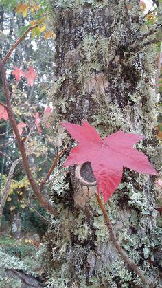 #beautifultree#beautifulleaf#nature#pedrassalgadas