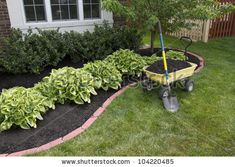Mulching Bed Around The House And Bushes, Wheelbarrow Along With A Shovel. Stock Photo 104220485 : Shutterstock
