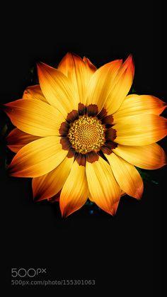 fanático de la las flores de primavera! by JoseThompson #nature #photooftheday #amazing #picoftheday