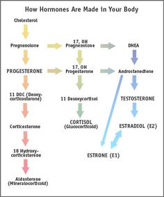 Metabolic Pathways - how hormones are made