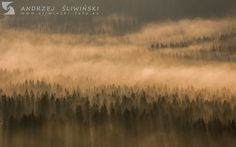Misty and misterious forest. Mountains, Nature, Travel, Photos, Viajes, Traveling, Nature Illustration, Off Grid, Trips