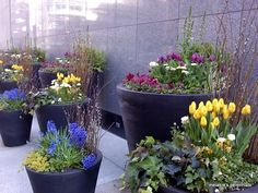 Spring containers seen in Chicago in 2010