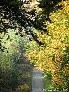 Route forestière de Prépotin Forêt de Perche Trappe