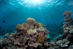 411 species of hard coral and over 150 species of soft coral makes up the Great Barrier Reef.