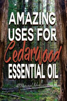 There are so many amazing cedarwood essential oil uses. If you have room in your oil collection, here are some top uses for cedarwood essential oil. Cedarwood Essential Oil Uses, Essential Oil Blends, Essential Oils, Cedarwood Oil, Ginger Benefits, Lip Gloss, Peppermint, Herbalism, The Cure