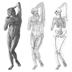 muscle and skeleton drawing of Michelangelo's 'Dying Slave' sculpture. There are probably a lot of inaccuracies, but I sure as hell tried really hard to get it looking ok.