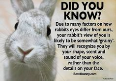 Tuesday tip... Ever wondered how bunnies see you through their eyes? Not as clear as you think! Which explains why they freak out sometimes when you walk by carrying a bag or box. It's not your usual shape! www.best4bunny.com