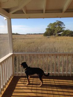 """CHIMNEY POT COTTAGE: """"One of my favorite places in the world... Best property on the island. What a wonderful, sunny, private, relaxing retreat."""" #tybee #tybeeisland #georgia #beach #travel #vacation"""