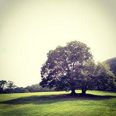 根岸森林公園 : 横浜市, 神奈川県