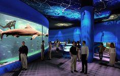 Aquário de São Paulo, é o primeiro aquário temático da América do Sul e um dos mais lindos do mundo!