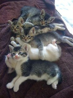 cybergata:  Pile of baby kittens by polizeros on Flickr.