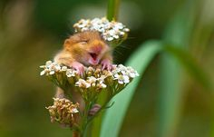 This Might Just Be The Happiest Mouse In The World - Naturely