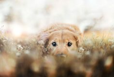 R.I.P Chuppy: Adorable Pet Photograhy by Jessica Trinh