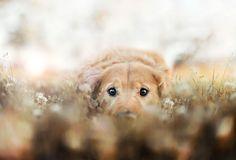 R.I.P Chuppy: Adorable Pet Photograhy by Jessica Trinh