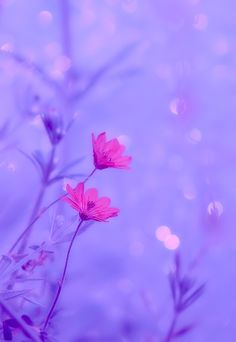 ~ Harmony ~ by Soorelis on Purple Flowers Wallpaper, Cute Pastel Wallpaper, Purple Wallpaper Iphone, Flower Background Wallpaper, Beautiful Flowers Wallpapers, Flower Phone Wallpaper, Beautiful Nature Wallpaper, Flower Backgrounds, Pretty Wallpapers