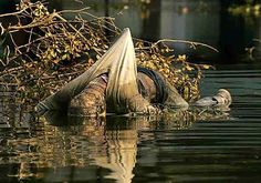Body Dead Hurricane Katrina   Recent Photos The Commons Getty Collection Galleries World Map App ...
